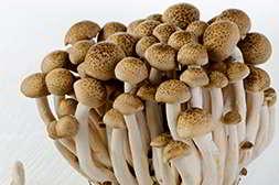Домашняя грибница быстро приносит урожай