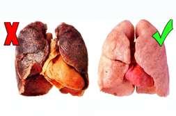 Smoke Out обладает свойством выводить табачные смолы, очищая от токсинов слизистые оболочки и лёгкие.